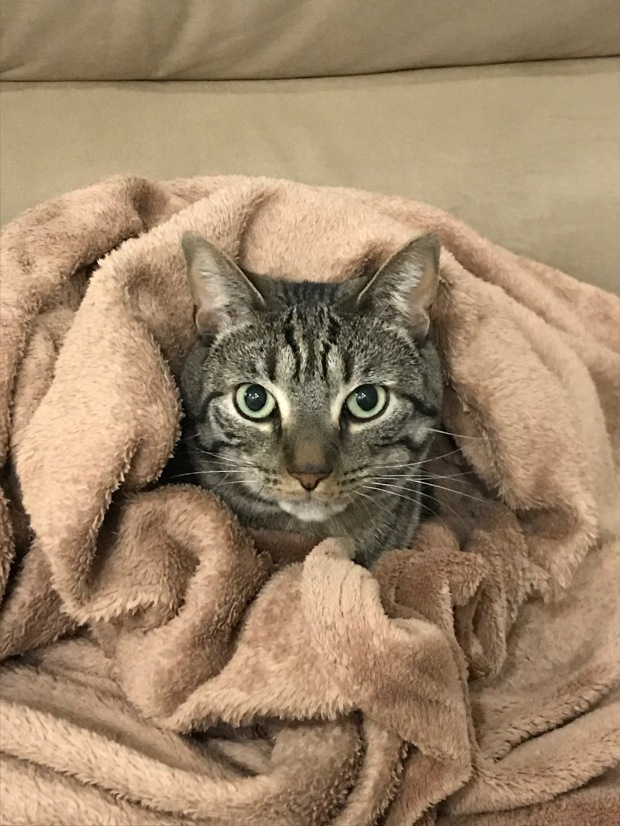 Cats Love Blankets